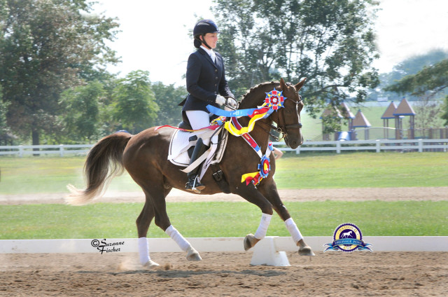 Avatar's Jazzman and Lauren Chumley celebrate their victories at the 2014 National Dressage Pony Cup. Photo by Suzanne Fischer.