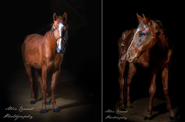It's hard to believe these two images feature the same horse. Photos courtesy of Allie Conrad.