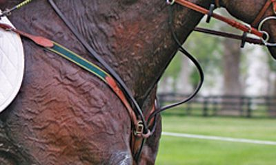 Just how quickly are horse's susceptible to heat stress - Photo from Kentucky Performance Products website