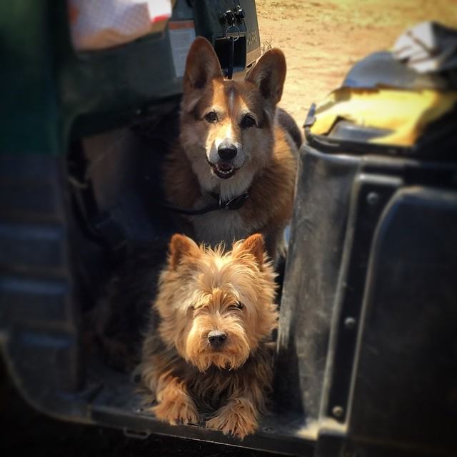 What is a horse show without dogs? Dragonfire Farm's Dylan and Monte guard the ranger.