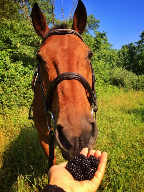 Blackberries: he loves them!!