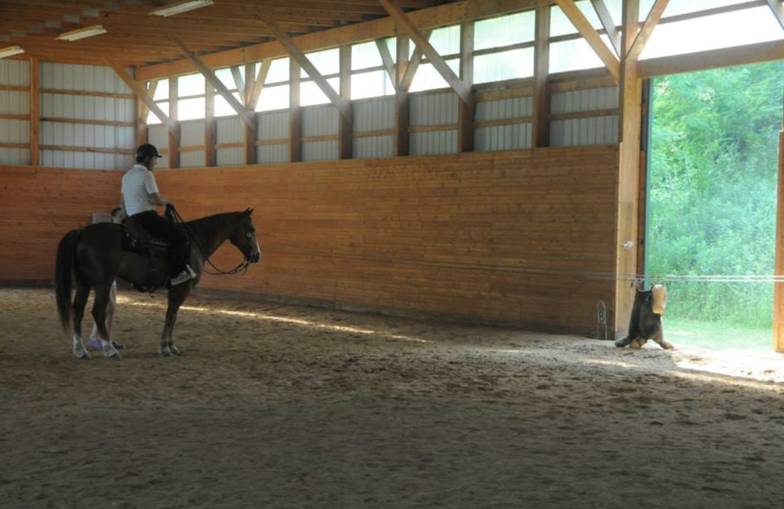 August Torsilieri, of Torsilieri Show Stables, was another one of our 'A' rated instructors. He tried cutting after camp one day and all of the campers enjoyed the demo. Photo by Gillian Warner.