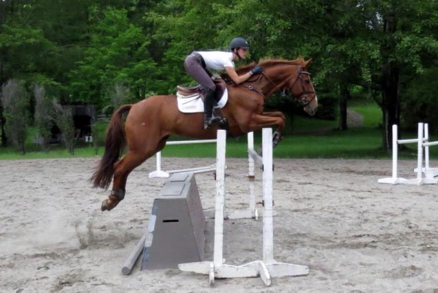 Vinnie in a June 2015 jump school. Photo by Denny Emerson.