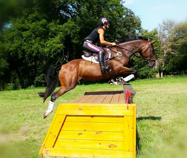 Clearing the enormous brushbox, earning our stripes out schooling.