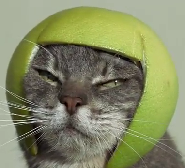 Even cats need some noggin protection.