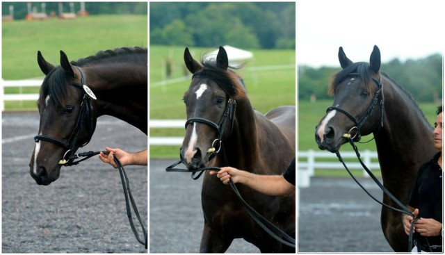 From L to R: Wiseguy Too, Wiseguy Too Two and Wiseguy Too Top. Photos courtesy of Ronald Zabala.