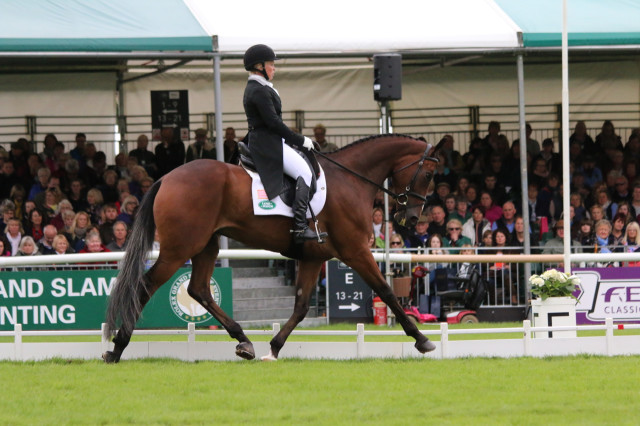 Colleen Rutledge and Covert Rights on their way to a top 25 score in the dressage at Land Rover Burghley Horse Trials Photo by Samantha Clark