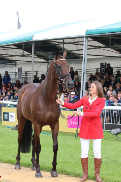 Lynn Symansky and Donner pass the Final Horse Inspection at Land Rover Burghley Inspection