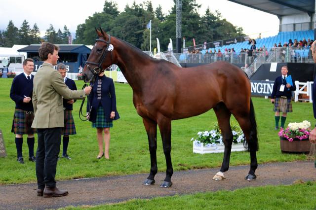 Sam Watson and Horseware Lukeswell for Ireland
