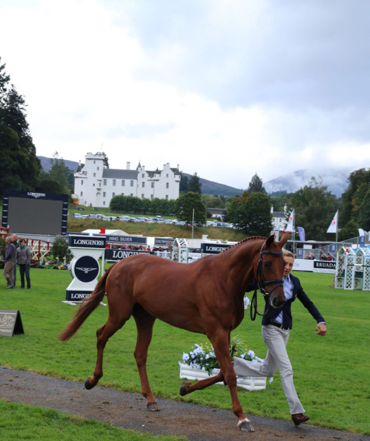 A very fresh Lilly Corinne with Sarah Bullimore Sunday Morning at Blair Castle European Championships
