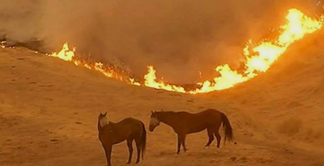 Photo from SAFER Sonoma County Equine Rescue's Facebook page