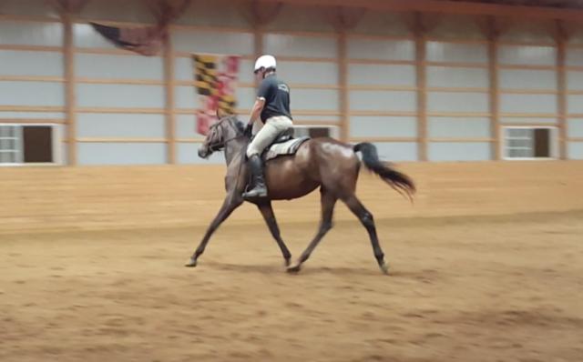 Dave Taylor riding Sauvignon Bai.