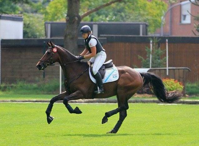Collnischken demonstrates his gallop at BuCha. Photo by Stephan Bischoff.