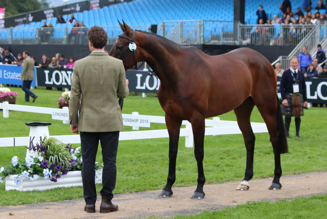 Sam Watson and Horseware Lukeswell: clear XC at Blair Castle European Championships