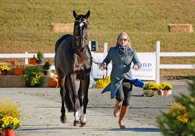 Marilyn Little and RF West Indie at the final horse inspection following cross country at Fair Hill. Photo by Jenni Autry,