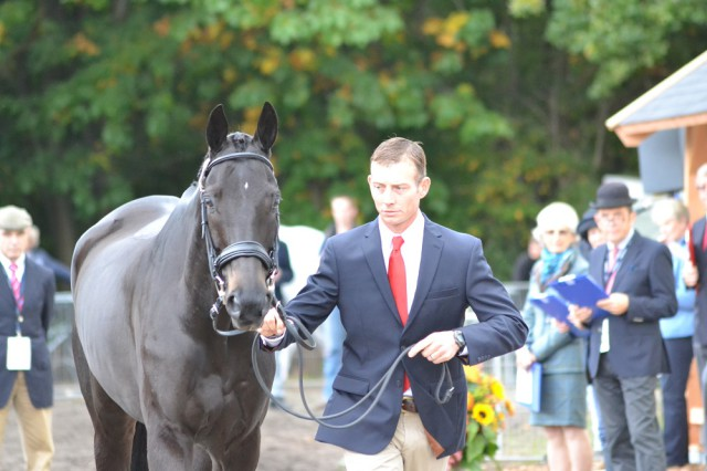 Jon Holling and Downtown Harrison at Boekelo. Photo by Leslie Wylie.