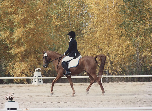 Dressage at Evergreen Farm (October 1991): On his way to another win at Training level. Photo by Bernadette Hare Chvoy.