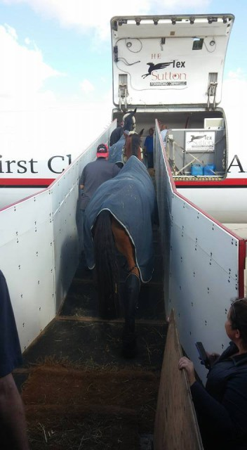 Phillip's horses getting a final glimpse of CA. Photo via USEF High Performance FB page.
