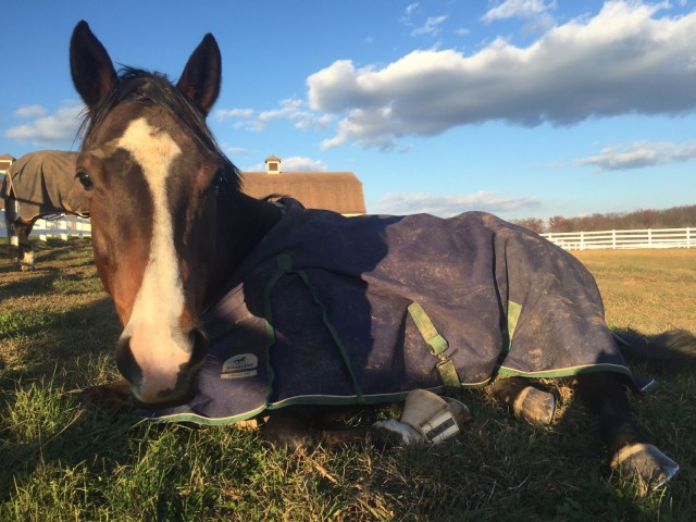 Serendipity enjoying some down time in the warmth of the sun at Sunset Hill at McCuan Farms. Photo by Kaitlyn Goodman