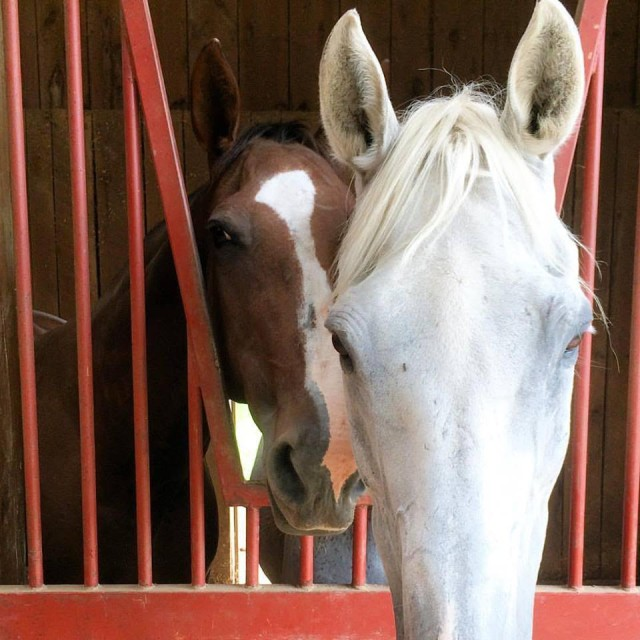 Lilly and Final sharing a stall. Photo by Hannah Forte.