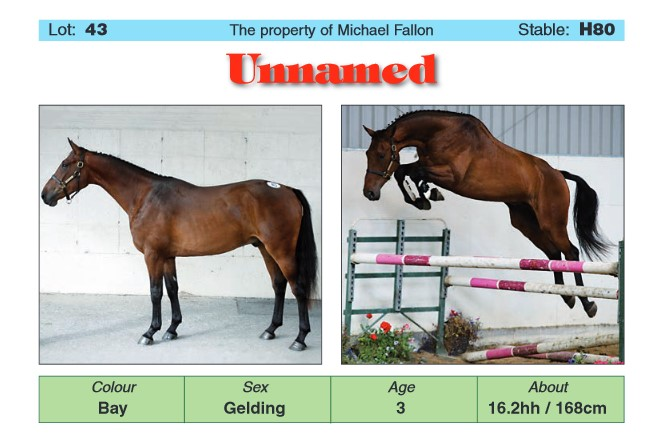 The top-selling 3-year-old, a gelding by Ramiro B. Screenshot via the Go for Gold catalogue.