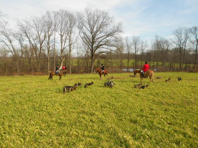 30 greg and hounds