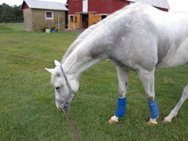 An injured horse means time spent in a different way around the barn, and it's good for your soul.