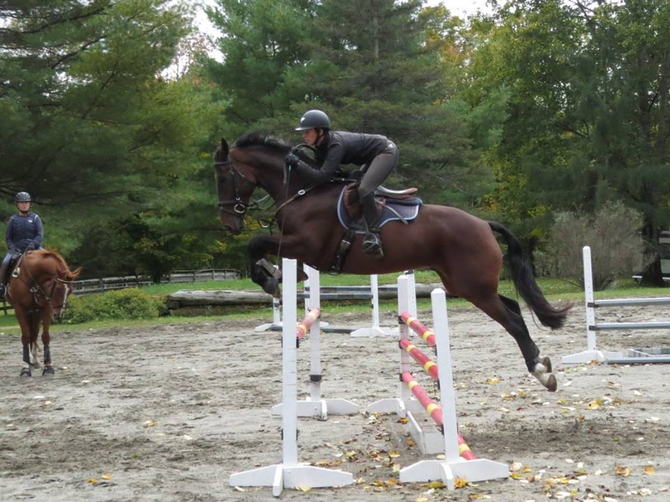 Ears back, tail twirling, ready for take off! Mr T Oct 2015 schooling at THF