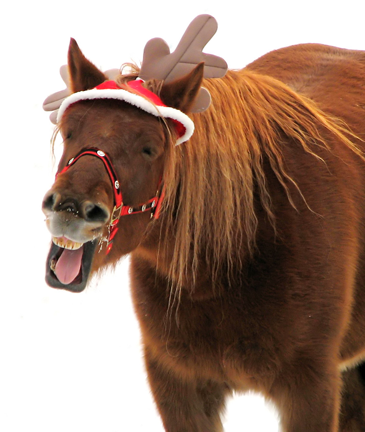 christmas news notes from flair nasal strips eventing nation three day eventing news results videos and commentary - Christmas Horse