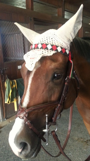The Custom Grosgrain Brow Band holds up against horses that tend to be rough on their tack.