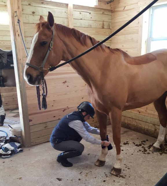 Sharon Getting Whitey Ready for His Lesson. Photo by Dave Taylor
