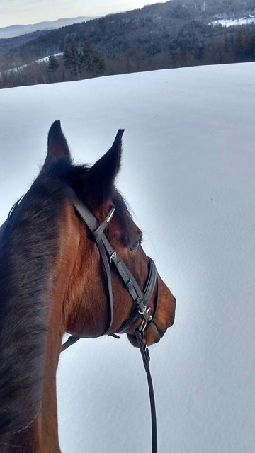 Hacking Mr T in Jan, checking out the scenery in Hartland VT!