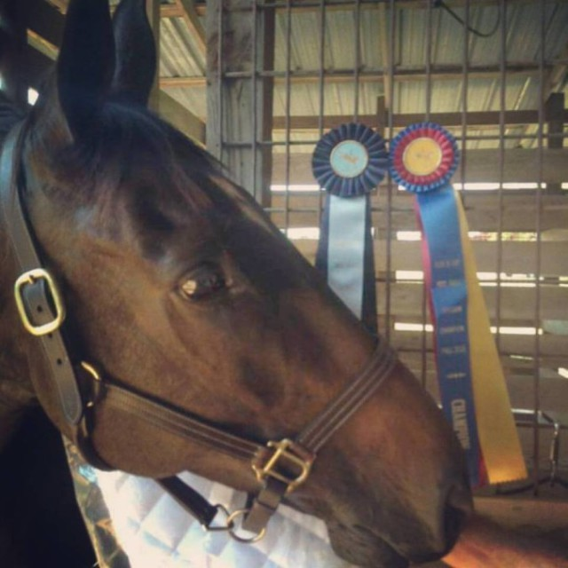 He's worth it. At our first show ever he won first in our class, division and overall OTTB score!
