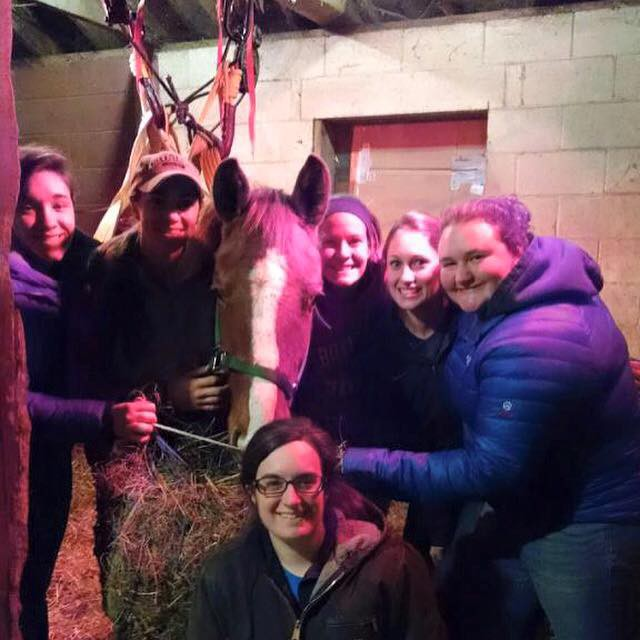 The rescue team with Clarissa, one of the horses in the most serious condition. Photo via Last Chance Ranch.