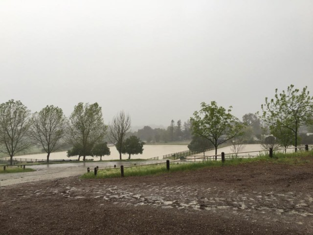 Little wet at Woodside Horse Park. Photo from Tayside Sporthorses on Facebook