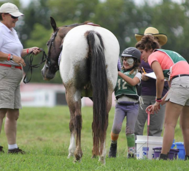 2015 Pony Club Rally post cross country vet box. Photo courtesy of Anne Peters.