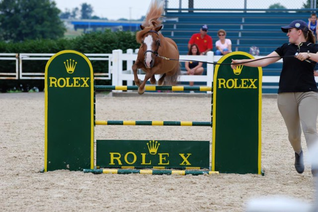 Patrick the mini horse is Rolex bound! Photo courtesy of Jessica Schaaf.