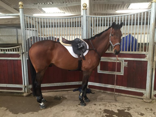 What a cutie! TS Jamaimo looking sharp after winter. From Chris Burton's Facebook page