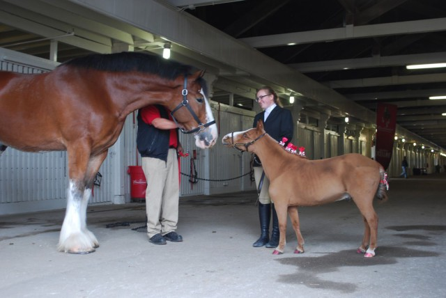 Patrick meeting a Budweiser Clydesdale. Photo courtesy of Jessica Schaaf.
