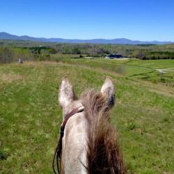 Willow admiring the view in beautiful Green Creek, NC. Photo by Leslie Threlkeld.