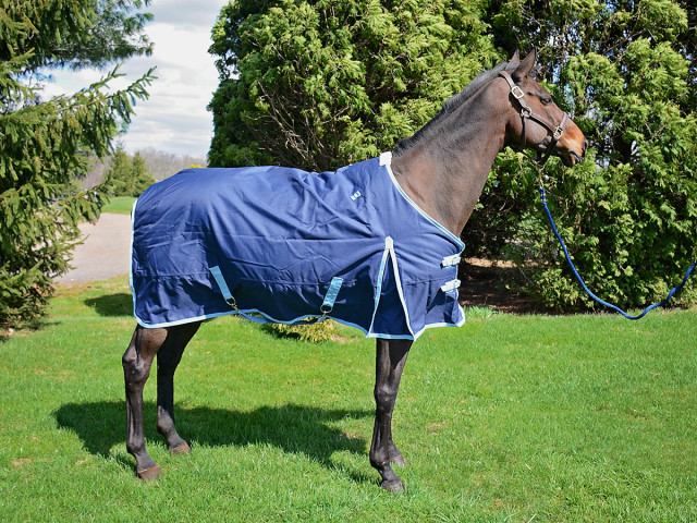 Mia models the Professional's Choice 1200D Winter Blanket in Navy/Blue. Photo by Josh Autry.
