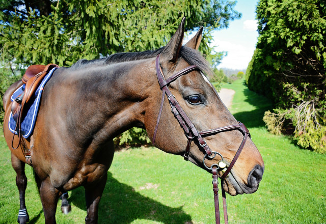Mia models the Veritas Fancy Raised Figure-8 Bridle from World Equestrian Brands. Photo by Jenni Autry.
