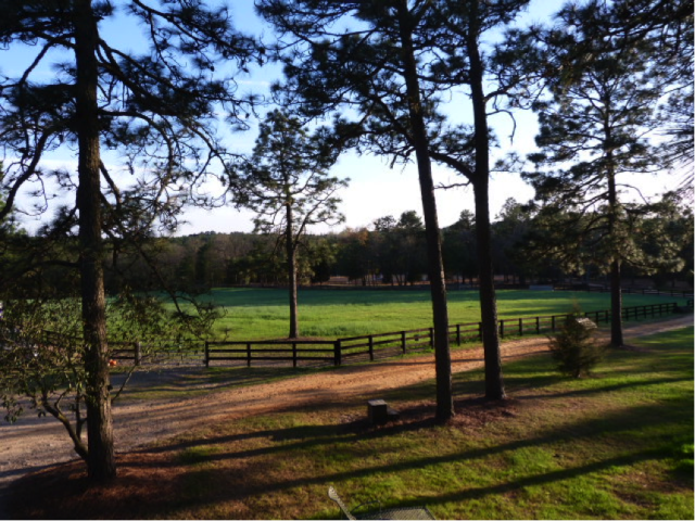 "The view from Denny and May Emerson's deck at Tamarack Hill Farm in Southern Pines, and the setting for ""happy half-hour"" and dinner at the end of every camp day."