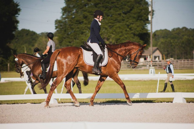 Sven Dressage. Photo by Jessie Hartford