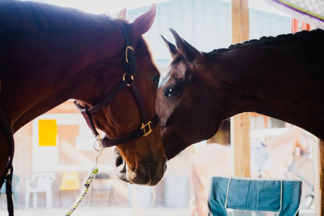 EZ, my older horse and Sven, the baby pony. Photo by Jessie Hartford.