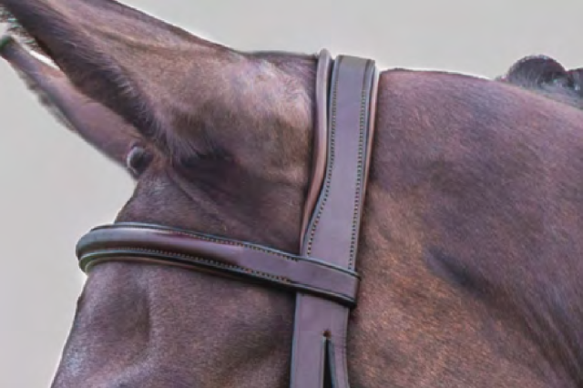 The awesome padded crownpiece on the Veritas Fancy Figure-8 Bridle. Photo courtesy of World Equestrian Brands.
