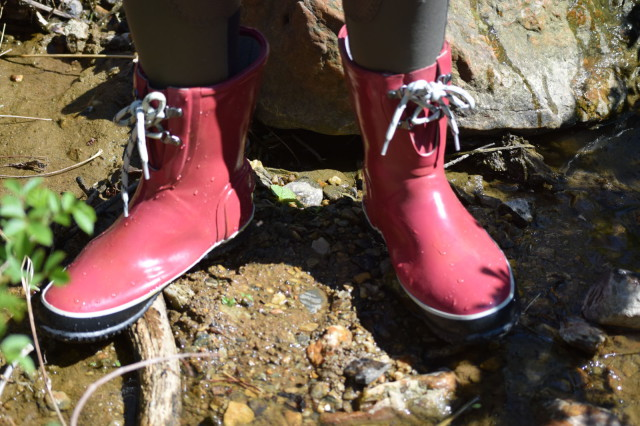 Not only are the Urban Farmer boots a nice height, they are also lined with EverDry and Bogs Max Wick...which means that they help to absorb and evaporate sweat! Photo by Lorraine Peachey.