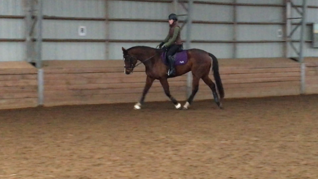 Grace and Truffle's first ride after recovering from EMP. Photo courtesy of Grace Mitchinson.