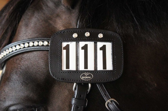 Image courtesy of World Equestrian Brands