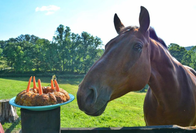 Yes, I made my horse a birthday carrot cake, why do you ask??